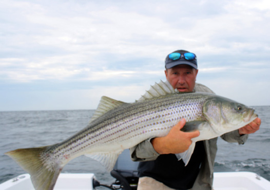 Fishing reports for Bass fishing in ct